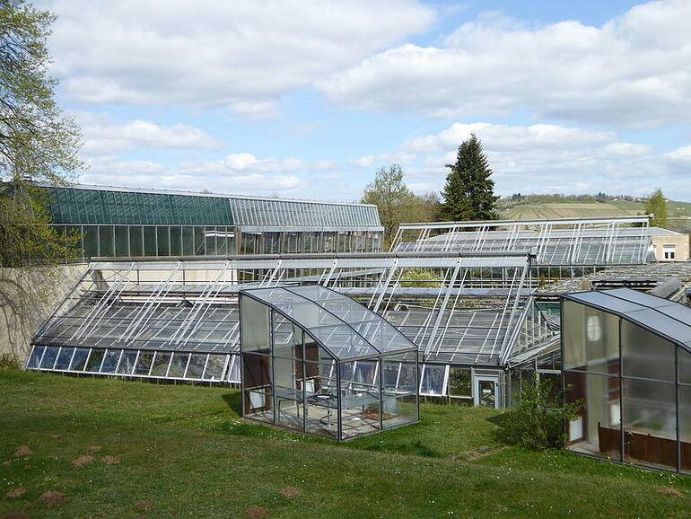 Tropenschauhaus Botanischer Garten Foto BGW ©BGW