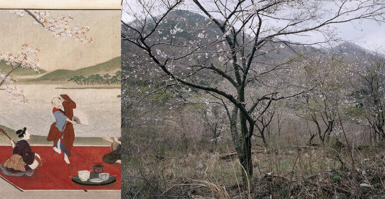 104 Gosaisan, Fukushima, Keiga, Kirschblüte, Cou. Collectie Stichting Nationaal Museum van Wereldculturen Foto und ©deJongKnoth C-Print
