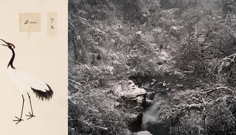 112 Knoth, de Jong, Katsurao, Präfektur Fukushima Foto und ©deJongKnoth Keiga, Mandschurenkranich, Siebold Collection, courtesy Leiden