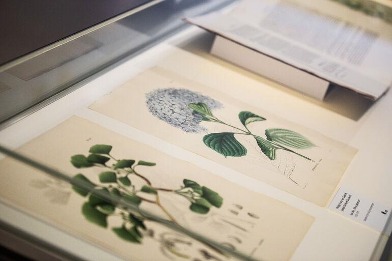 Ausstellungsraum Tree and Soil  4 Foto und ©Kiefer