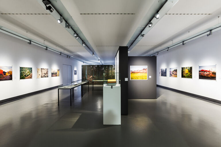 Ausstellungsraum Tree and Soil  5Foto und ©Kiefer