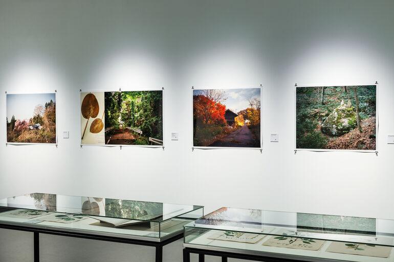 Ausstellungsraum Tree and Soil 3 Foto und ©Kiefer